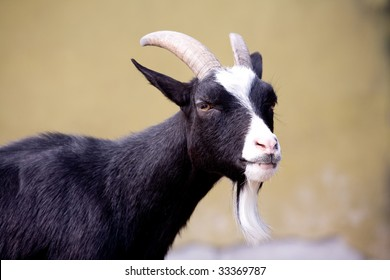 Year of a goat