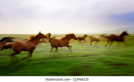 year old horses in the race