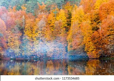 Yedigoller National Park, Autumn views. Bolu, Turkey