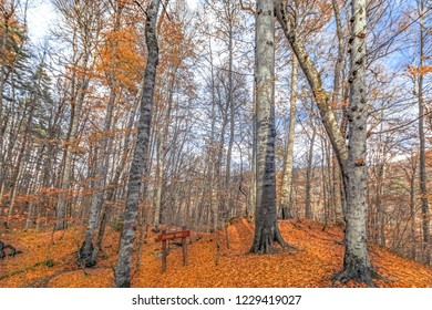 "Yedigoller ""seven lakes"" National Park pisagor tree (Pythagoras symbol of trees) , Bolu, Turkey"