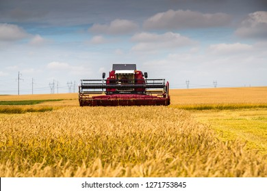 Yekaterinburg, RUSSIA - August 23, 2018: Combine harvester at work harvesting a field of wheat