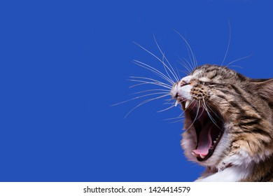 A yelling cat head profile with long whiskers on a blue background