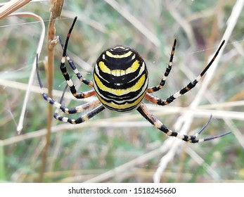 Yello and black spiderman hanging on the web between the grass.