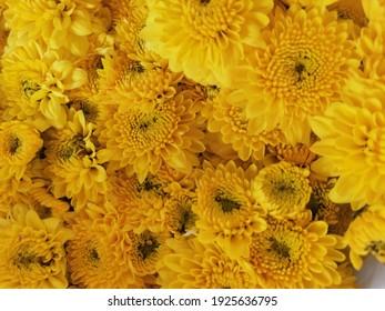 Yellow Flower Market Bangkok Thailand