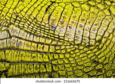 Yellow alligator patterned background