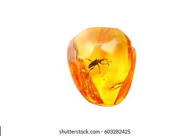 Yellow almost transparent natural amber with inclusions.Very beautiful amber with a beetle inside on a white background.