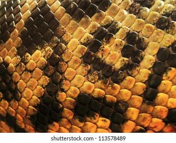 yellow anaconda skin from alive body