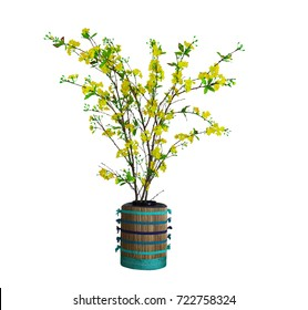 Yellow Apricot Blossom, Vietnamese traditional lunar new year flower