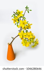 Yellow Apricot Flower in vase isolated on white background, traditional lunar new year in Vietnam