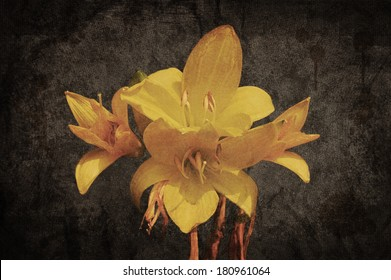 Yellow Asiatic lily on old grunged canvas background