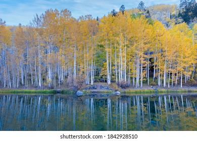 Yellow Aspen Trees with reflection Near Telluride Colorado - Composite Sky