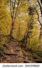 Yellow Atumn forest and path with stones