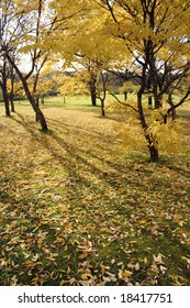 Yellow Autumn