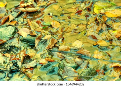 Yellow autumn background. leaves floating in water texture.