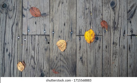 Yellow autumn leaf drop on wooden walkway for background with copy space