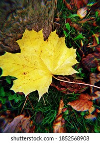 The yellow autumn leaf fell to the ground - Shutterstock ID 1852568908