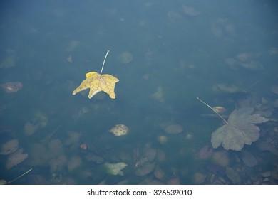 Yellow autumn leaf on lake surface, detail