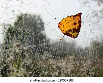 Yellow autumn leaf on spider web.