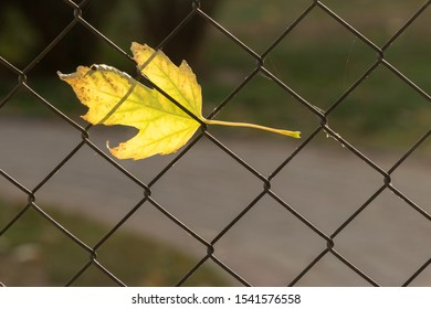 Yellow autumn leaf stuck in the grate of a metal mesh fence