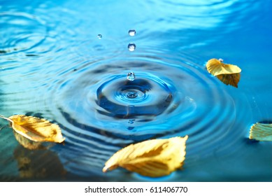Yellow Autumn leaves floating on rippled water surface, Fall background