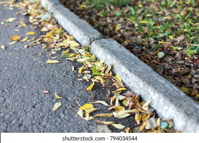 Yellow autumn leaves lie on the road near the curb