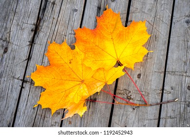 Yellow autumn leaves of maple on the wood