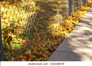 Yellow Autumn Leaves On A Green Grass Lawn Stuck Against A Fence Along A Concrete Sidewalk