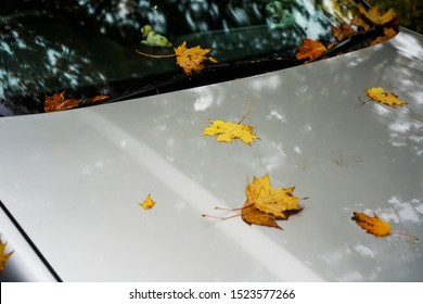 Yellow autumn leaves on silver hood  and windshield of a gray modern car. rainy wet day. bad weather.