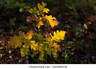 Yellow autumn leaves on tree illuminated by sunlight