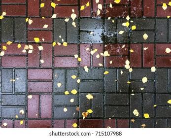 Yellow autumn leaves on the wet sidewalk. Rain, autumn