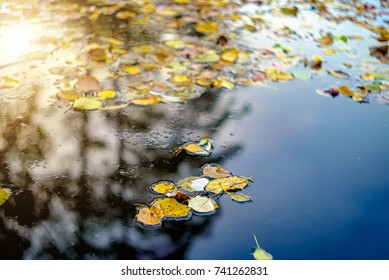 Yellow autumn leaves in water