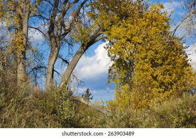 Yellow autumn tree arches over with view of blue sky and clouds beyond