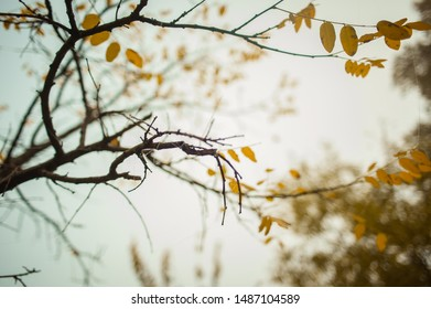 Yellow autumn tree leaves background
