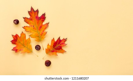 Yellow background with autumn leaves. Place for your text or logo. IAutumn season concept. Flat lay style.
