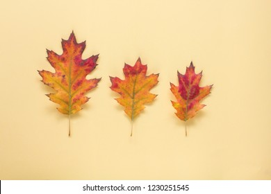 Yellow background with autumn leaves. Place for your text or logo. Autumn season concept. Flat lay style.