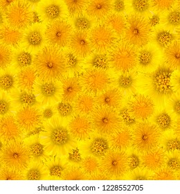 yellow background of dandelion flowers and foalfoot, seamless