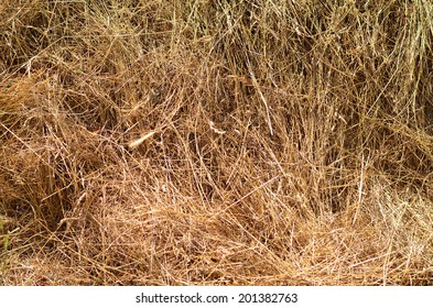 Yellow background with hay
