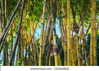 Yellow bamboo forest pattern background