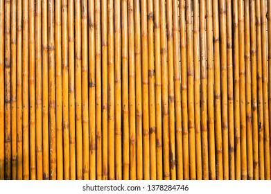 Yellow bamboo wallpaper
