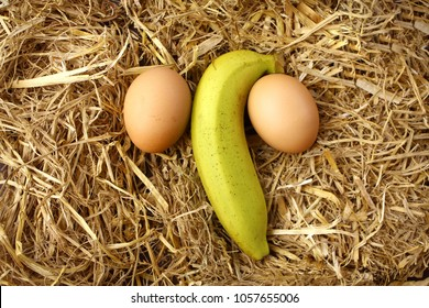 Yellow banana with 2 eggs.placed on dry grass.Symbols to the penis or male organs. concept:  Penis size and nourishment and health.Penis measure, man power and potency,
