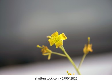 Yellow beautiful flower on a silver neutral background