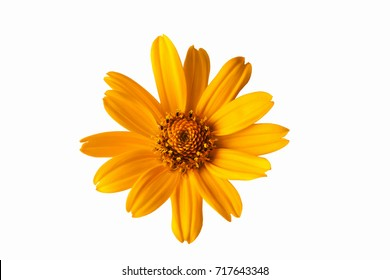 yellow beautiful flower on a white background