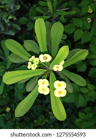 Yellow Beautiful Flower Wallpepar