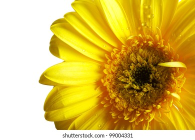 Yellow beautiful gerber flower isolated over white