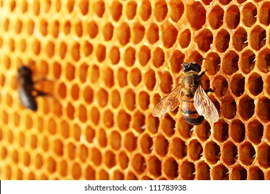 yellow beautiful honeycomb with honey and bee, background