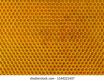 yellow bee cells with honey healthy food. background