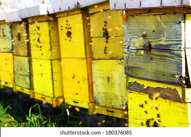 Yellow beehives with bees on a sunny spring day