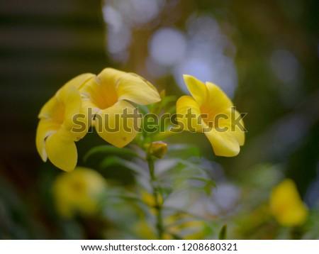 Yellow Bell Flowers Stock Photo Edit Now 1208680321 Shutterstock