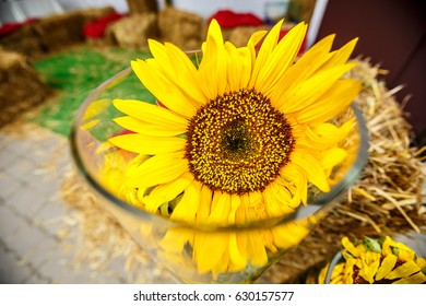 Yellow big flower of a sunflower in a glass vase