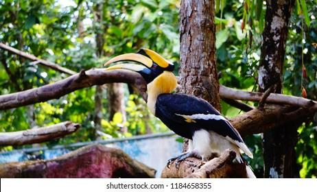Yellow Billed Hornbill Great hornbill, Great indian hornbill, Great pied hornbill, selective focus